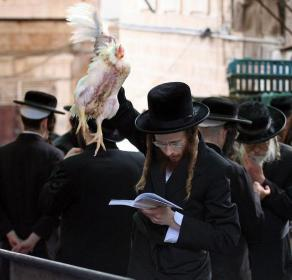 Kapparot-chickenslaughter-YomKippur14
